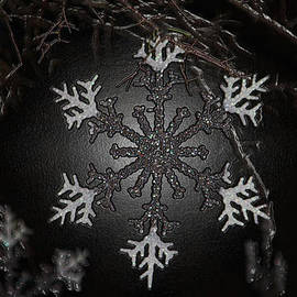 Cynthia Guinn - Snowflakes