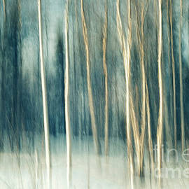 Priska Wettstein - Snowy birch grove