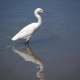 Leticia Latocki - Snowy Egret