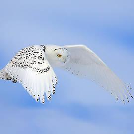 Keith R Crowley - Snowy Flight