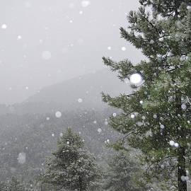 Guido Montanes Castillo - Snowy Forest
