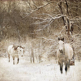 Paula Fankhauser - Snowy Mares