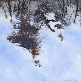 R christopher Vest - Snowy Oak Hillside Song Sparrow