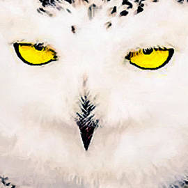Bob and Nadine Johnston - Artic Snowy Owl Painting