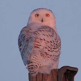 Keith R Crowley - Snowy Owl Sunrise