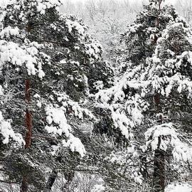 Kathleen Struckle - Snowy Pines