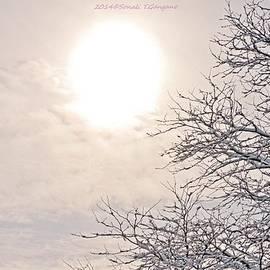 Sonali Gangane - Snowy Radiance