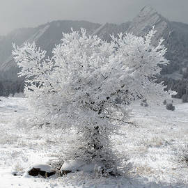 Aaron Spong - Snowy Tree