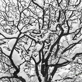 James BO  Insogna - Snowy Tree Black and White