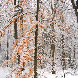 Ann Horn - Snowy Woods