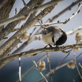Deb Henman - So Cold Chickadee