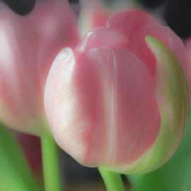 Hal Halli - So Pink For you