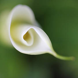 Jennie Marie Schell - Soft Beginnings Calla Lily Flower