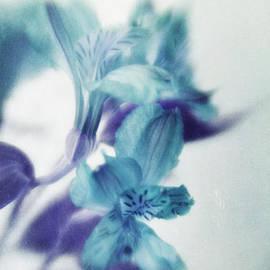 Priska Wettstein - Soft Blues