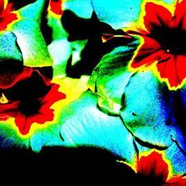Hilde Widerberg - Soft darkness