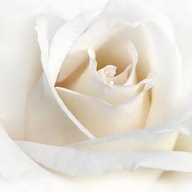 Jennie Marie Schell - Soft Ivory Rose Flower