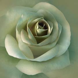 Jennie Marie Schell - Soft Olive Green Rose Flower