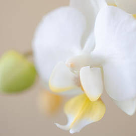 Kelly Anderson - Soft Orchid on Pale Peach