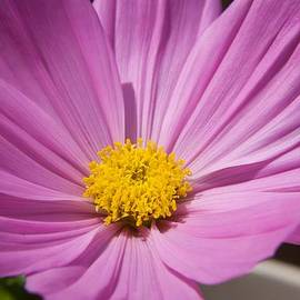 Tyra  OBryant - Soft Petals