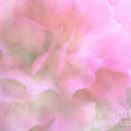 Arlene Carmel - Soft Pink Begonia