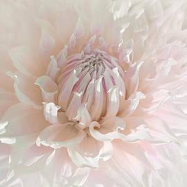 Jennie Marie Schell - Soft Pink Dahlia Flower
