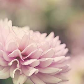 Heather Applegate - Soft Pink Dahlia
