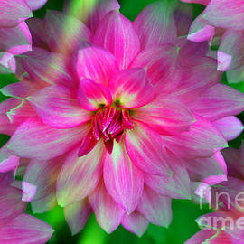 Judy Palkimas - Soft Pink Endless Dahlia