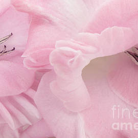 Ann Garrett - Soft Pink Glads