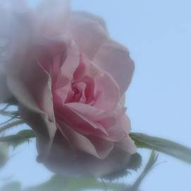 MTBobbins Photography - Soft Pink on Blue Rose