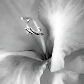 Jennie Marie Schell - Soft Silver Gladiola Floral
