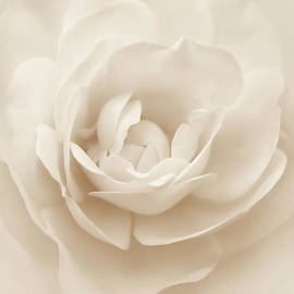 Jennie Marie Schell - Soft Whispers Ivory Rose Flower