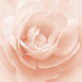 Jennie Marie Schell - Soft Whispers Peach Rose Flower