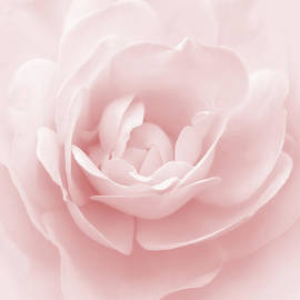 Jennie Marie Schell - Soft Whispers Pink Rose Flower
