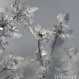 Nina Stavlund - Soft Winter Whisper..