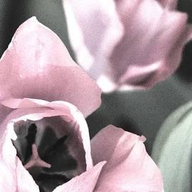 Angela Davies - Softly Spring Arrives