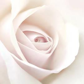 Jennie Marie Schell - Softness of a Pastel Rose Flower