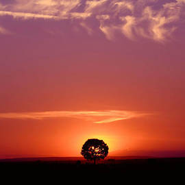 John Dickinson - Solitary tree