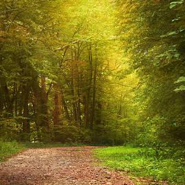 Christina Rollo - Solitude Path