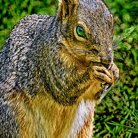 Bob and Nadine Johnston - SOME Squirrels are Big