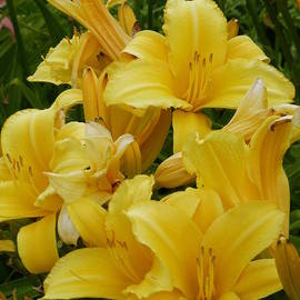 Barbara Ebeling - Summer Bouquet