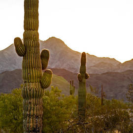 Robert Bales - Sonoran Desert II