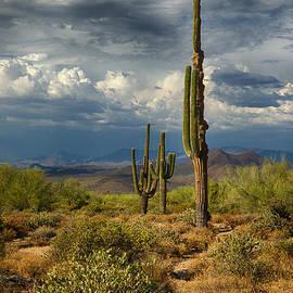 Saija  Lehtonen - Sonoran Desert Rains