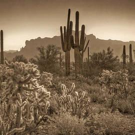 Saija  Lehtonen - Sonoran Desert Sepia