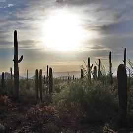David Broome - Sonoran Morning