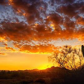 Saija  Lehtonen - Sonoran Style Sunrise