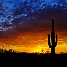 Saija  Lehtonen - Sonoran Style Sunset