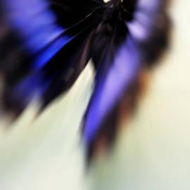 Jenny Rainbow - Soul Flight. Impressionism