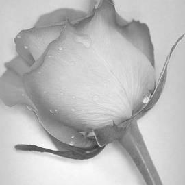 The Art Of Marilyn Ridoutt-Greene - Soul