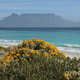 Meleah Fotografie - South Africa Table Mountain
