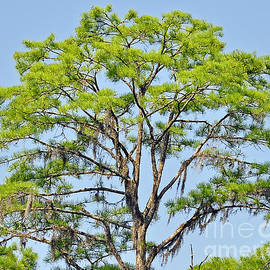 Al Powell Photography USA - Southern Cypress